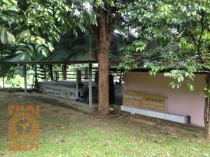 phuket-muaythai-1